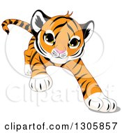 Clipart Of A Cute Playful Tiger Cub Stalking Running Or Pouncing Royalty Free Vector Illustration