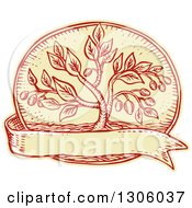 Clipart Of A Sketched Or Engraved Olive Tree In An Oval Over A Blank Ribbon Royalty Free Vector Illustration