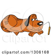 Clipart Of A Cartoon Hound Dog Resting And Nibbling On A Cattail Royalty Free Vector Illustration by LaffToon