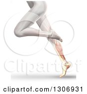 Clipart Of A 3d Anatomical Running Womans Legs With Visible Calf Muscles And Bone On White Royalty Free Illustration by KJ Pargeter