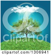 Clipart Of A Rainbow Clouds And Rain Over A 3d Walnut Tree On A Grassy Hill Royalty Free Illustration by KJ Pargeter