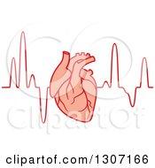 Human Heart Over An Electrocardiogram Graph