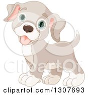 Clipart Of A Cute Beige Baby Puppy Dog With Blue Eyes Royalty Free Vector Illustration