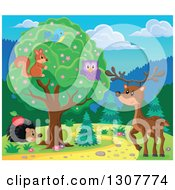 Squirrel Bird And Owl In A Tree Over A Deer And Hedgehog Along A Forest Path