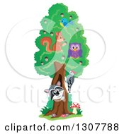 Clipart Of A Happy Raccoon Peeking Out Through A Tree Hollow With Birds An Owl And Squirrel Royalty Free Vector Illustration by visekart