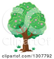 Clipart Of A Lush Tree With Pink Spring Blossoms Royalty Free Vector Illustration