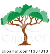 Clipart Of An African Acacia Or Umbrella Tree Royalty Free Vector Illustration