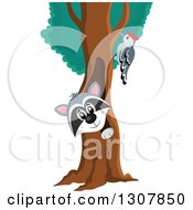 Clipart Of A Happy Raccoon Peeking Out Through A Tree Hollow And Woodpecker Royalty Free Vector Illustration