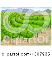 Clipart Of A Vineyard Background With Mountains And Vines Royalty Free Vector Illustration
