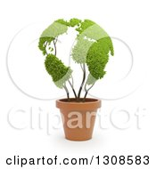 3d Leafy Globe Plant In A Terra Cotta Pot Over White