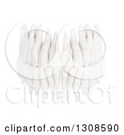 Clipart Of 3d Human Teeth From The Front On White Royalty Free Illustration