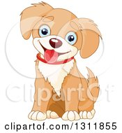 Cute Tan And Beige Baby Puppy Dog With Blue Eyes Sitting And Panting