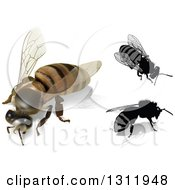 Clipart Of 3d And Cartoon Honey Bees Royalty Free Vector Illustration by dero