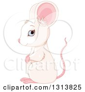 Clipart Of A Cute Blue Eyed White Mouse With A Pink Tail And Ears Facing Left Royalty Free Vector Illustration
