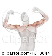 Clipart Of A 3d Medical Anatomical Male Flexing Both Of His Biceps With Visible Muscles On White Royalty Free Illustration