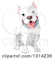 Clipart Of A Cute Happy Gray And White Adult Pit Bull Dog Sitting Royalty Free Vector Illustration