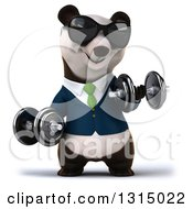 Clipart Of A 3d Happy Business Panda Wearing Sunglasses Working Out Doing Bicep Curls With Dumbbells Royalty Free Illustration