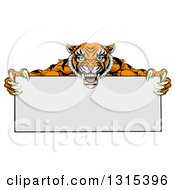 Clipart Of A Cartoon Aggressive Tiger Sports Mascot Holding A Blank Wide Sign Royalty Free Vector Illustration