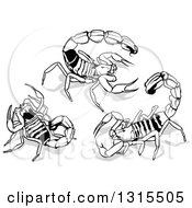 Clipart Of Desert Scorpions And Shadows Royalty Free Vector Illustration