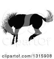 Clipart Of A Black Silhouetted Horse Bucking Royalty Free Vector Illustration