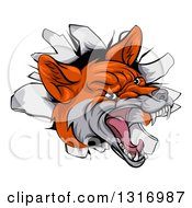 Clipart Of A Vicious Fox Breaking Through A Wall Royalty Free Vector Illustration by AtStockIllustration