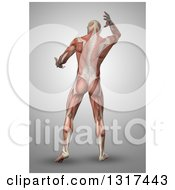 Clipart Of A 3d Rear View Of An Anatomical Man With Visible Muscles On Gray Royalty Free Illustration