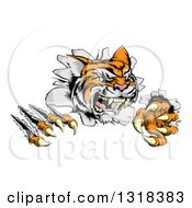 Clipart Of A Snarling Tiger Mascot Slashing Through A Wall Royalty Free Vector Illustration