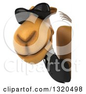 Clipart Of A 3d Business Camel Wearing Sunglasses And Looking Around A Sign Royalty Free Illustration