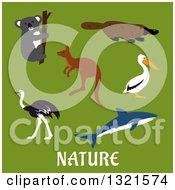 Poster, Art Print Of Flat Design Koala Platypus Pelican Shark Kangaroo And Ostrich Over Nature Text On Green