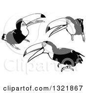 Black And White Toucan Birds