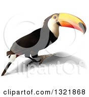 Clipart Of A 3d Toucan Bird And Shadow Royalty Free Vector Illustration