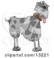 Friendly Great Dane Dog Hanging Its Tongue Out Clipart Illustration