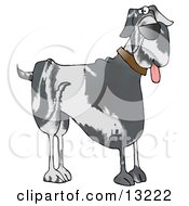 Cute Great Dane Doggy Clipart Illustration