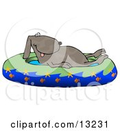Hot Dog Soaking In A Kiddie Pool Decorated With Starfish And Goldfish