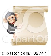 Happy Chimpanzee Monkey Clinging To The Side Of A Blank Parchment Scroll And Pointing