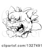 Clipart Of A Black And White Mad Wildcat Mascot Head Breaking Through A Wall Royalty Free Vector Illustration