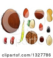 Clipart Of A Cartoon Coconut Almond Hazelnut Pistachio Coffee Bean Peanuts Sunflower Seed Pumpkin Seed Walnut And Beans Royalty Free Vector Illustration by Vector Tradition SM