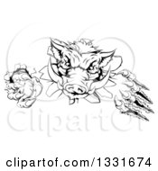 Clipart Of A Black And White Aggressive Clawed Boar Mascot Slashing Through A Wall Royalty Free Vector Illustration