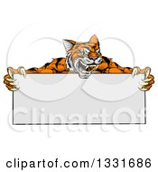 Clipart Of A Cartoon Aggressive Tiger Sports Mascot Holding A Blank Wide Sign 2 Royalty Free Vector Illustration