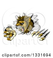 Clipart Of A Roaring Lion Mascot Slashing Through A Wall Royalty Free Vector Illustration