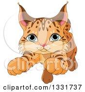 Cute Baby Bobcat Cub Pouncing