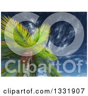 Clipart Of A 3d View Looking Up At A Tropical Palm Tree Against Blue Sky With Wispy Clouds Royalty Free Illustration
