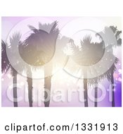 Clipart Of A Background Of Silhouetted Palm Trees With A Sunset Shining Through The Branches Over Purple Flares Royalty Free Vector Illustration
