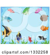 Clipart Of A Border Of Curious Marine Fish And Seaweed Focused On The Center Royalty Free Vector Illustration