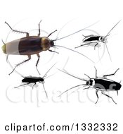 Clipart Of 3d And Grayscale Cockroaches Royalty Free Vector Illustration by dero