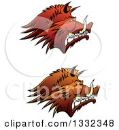 Clipart Of Brown Snarling Vicious Razorback Boar Mascot Heads In Profile Royalty Free Vector Illustration