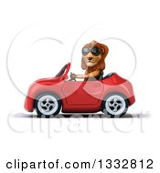 Clipart Of A 3d Male Lion Wearing Sunglasses And Driving A Red Convertible Car 2 Royalty Free Illustration