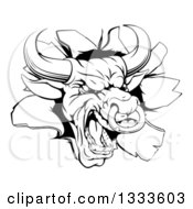 Clipart Of A Vicious Snarling Aggressive Black And White Bull Breaking Through A Wall 2 Royalty Free Vector Illustration