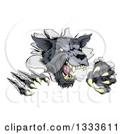 Clipart Of A Ferocious Gray Wolf Slashing Through A Wall Royalty Free Vector Illustration