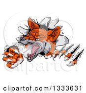 Clipart Of A Vicious Fox Slashing Through A Wall Royalty Free Vector Illustration by AtStockIllustration